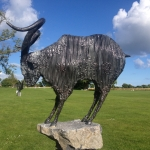 Slieve Aughty Goat by Donnacha Cahill